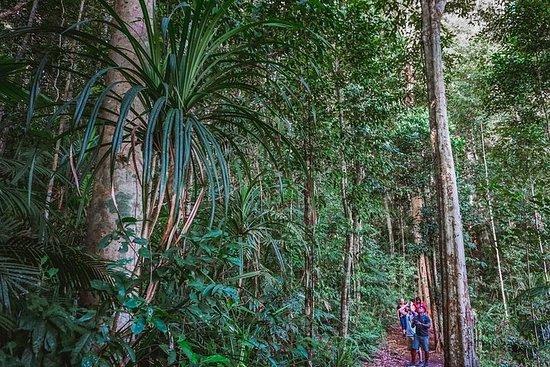 Sortie nocturne dans la forêt équatoriale du plateau d'Atherton au...