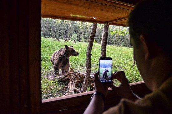 Excursion d'une journée et observation des ours au pays des volcans