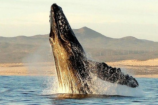 Interactive Whale Watching & Lunch Cruise