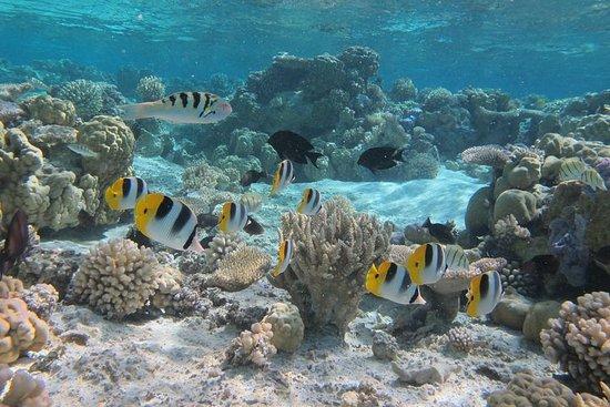 Croisière avec snorkeling à Bora Bora...