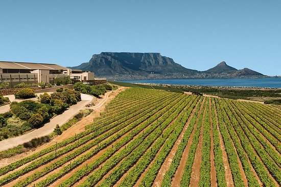 Full-Day Durbanville Valley Wine Tasting Private Tour from Cape Town