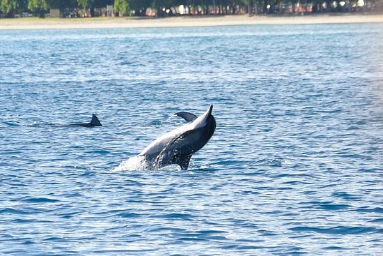 Dolfijnen ontmoeting en walvis spotten