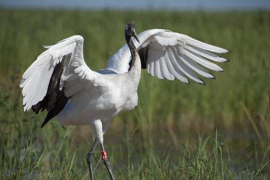 Excursión Privada: Observación de aves en Dongtan Wetland Park desde...