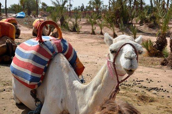 Visita guiada de Marrakech desde...