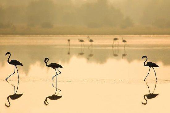塞维利亚全日多纳纳国家公园之旅