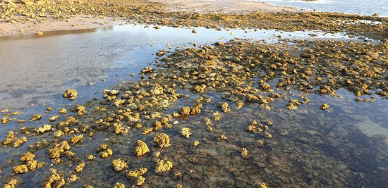 CEDUNA JETTY    shallows again from the jetty