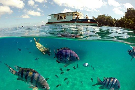 Sancho Bay Svømmer fra Fernando de Noronha
