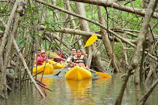 Damas Island Mangrove Kayaking Tour...
