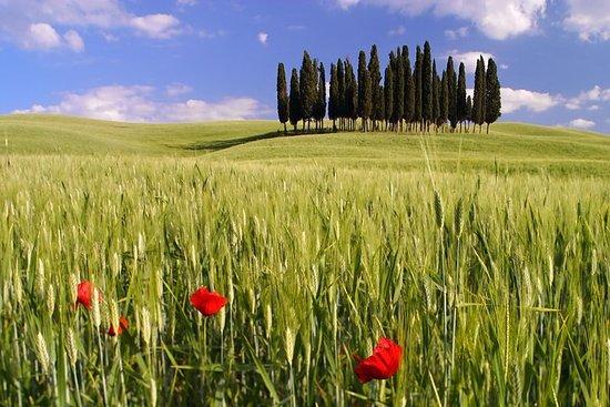 Montalcino, Valle de Orcia, Pienza y...