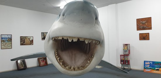 Great White Shark Replica Streaky Bay      My what a big mouth yo have!