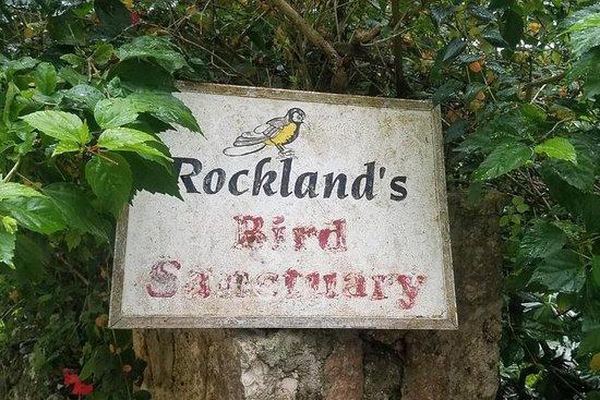Rockland Bird Feeding And Montego Bay...