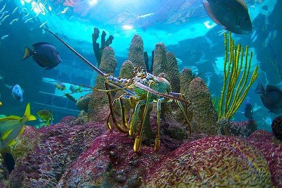Fulldags tur til Florida Keys Aquarium møter fra Key West