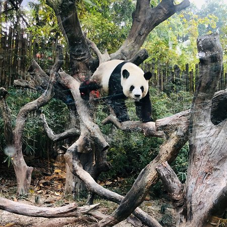 We were in December it was fantastic trip and we come back again. Pandas are fantastic!