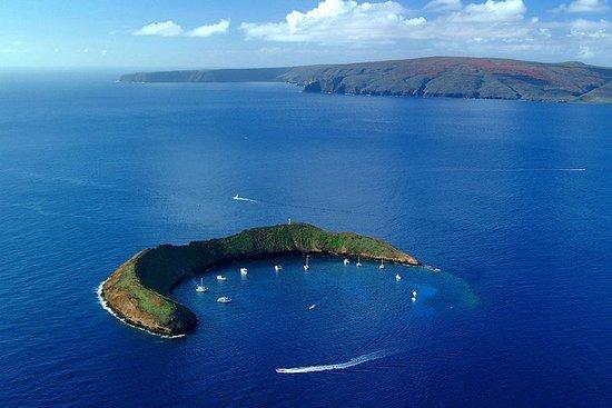 Afternoon (PM) Snorkel Aboard Malolo (MAUI / Ma'alaea Harbor)