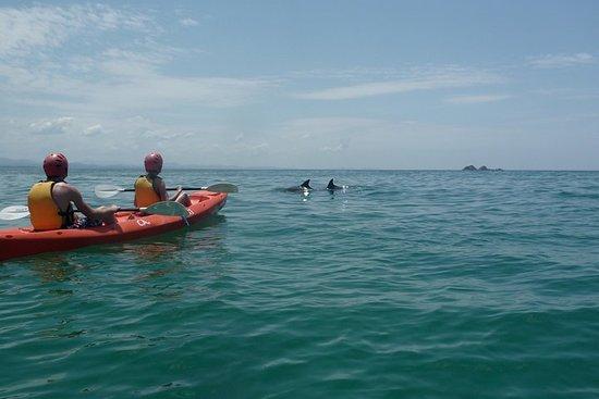 Kajakkpadling med delfiner i Byron Bay