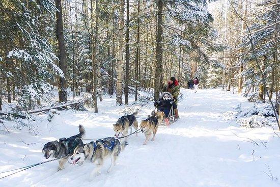 Tour de trineos de perros...