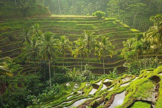 Excursão privada a Ubud com passeio de...
