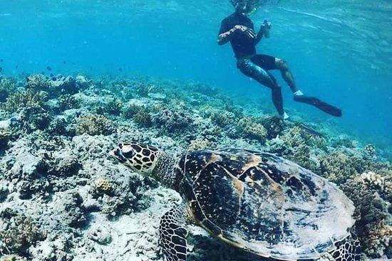Gili Island Snorkeling Day Trip