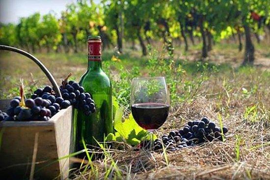 Recorrido vinícola privado a Kajetia...