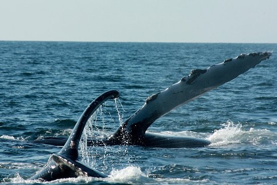 Whale Watching Cruise in Puerto...