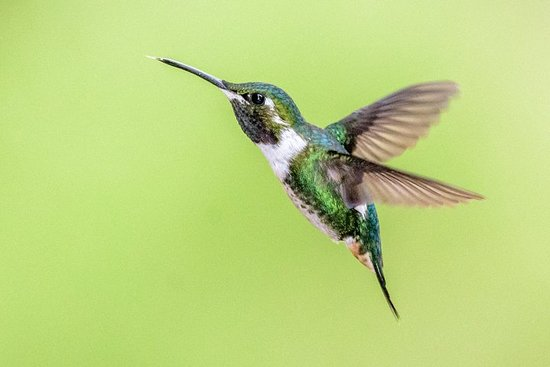 Фотография Hummingbirds of the Andes day tour.