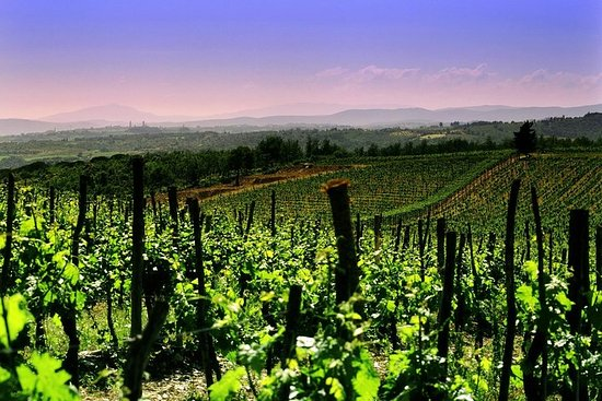 Private Tour to a winery in Franciacorta and Bergamo from Milan w...