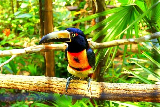 Privat Belize Zoo & Cave Tubing...