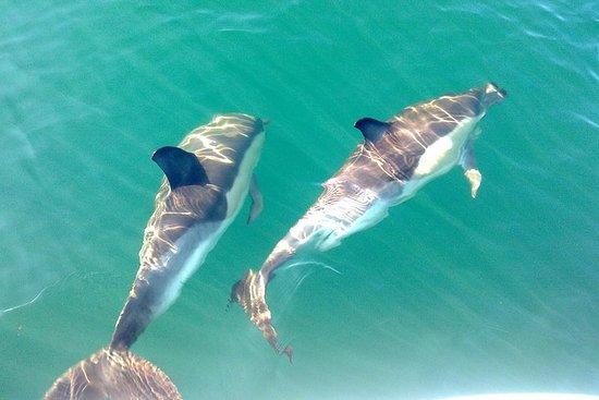 Observation des dauphins - transfert...