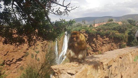Ouzoud Waterfalls Day Trip fra Marrakech