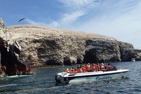 Aus Lima: Paracas und Ica 1D