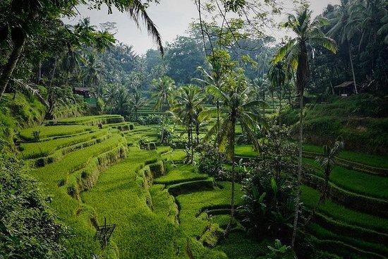 美丽的巴厘岛全日游