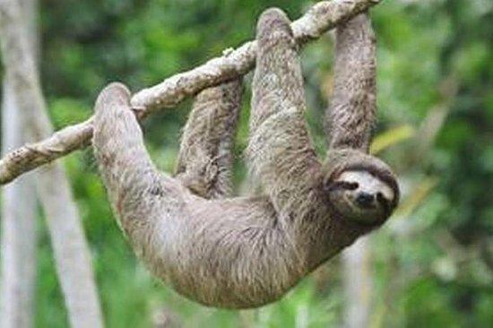 Rainforest Bijagua Ranas & Sloth tours