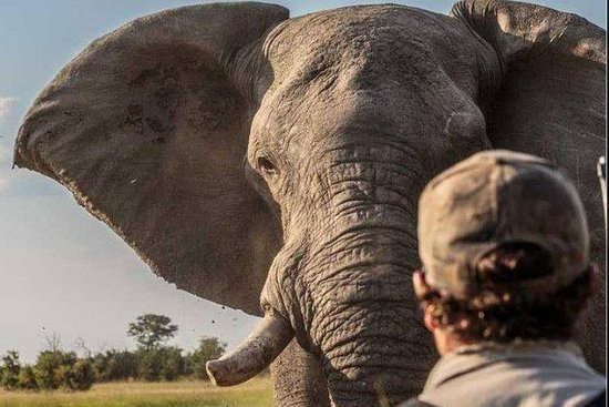 Safari matinal et safari à pied