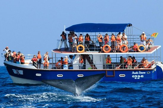 Mirissa Whales & Dolphin Watching day...