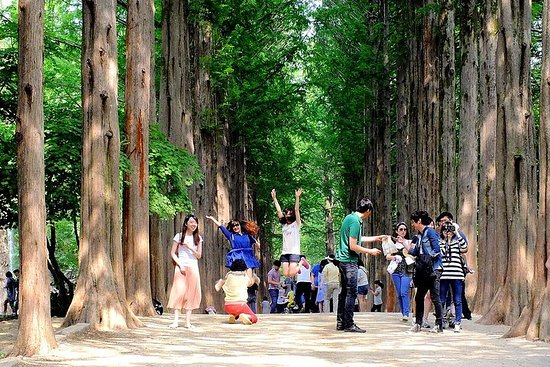 Full Day Nami Island and Petite France Tour from Seoul – fénykép
