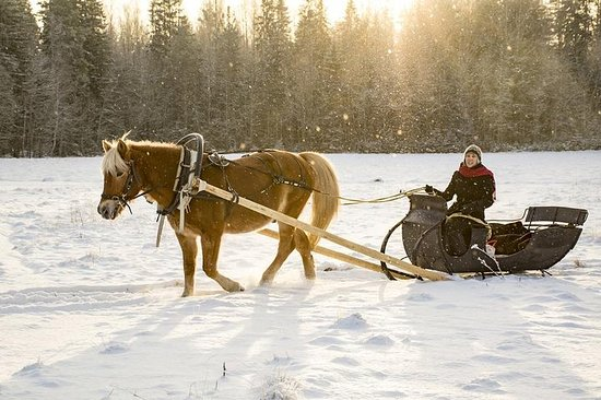 Wintertour und Pferdeschlittenfahrt...