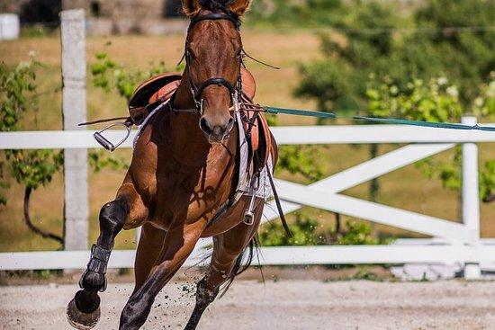 Full-Day Private Horseback Riding Tour...