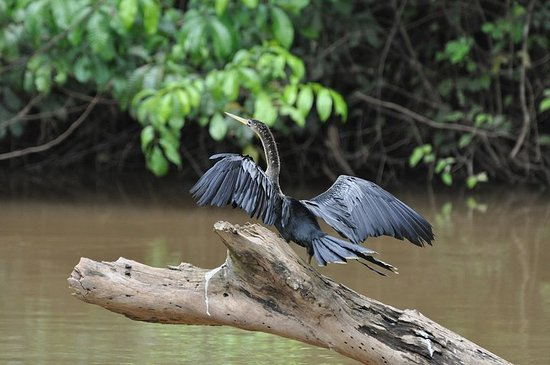 Caño Negro Wildlife Refuge Day Trip...