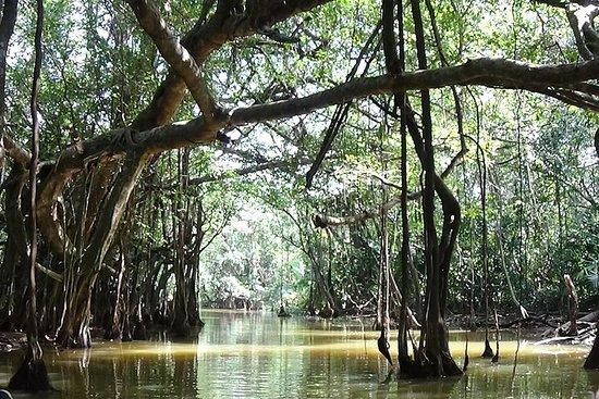 Full-Day Little Amazon og Sri Phang Nga National Park fra Khao Lak