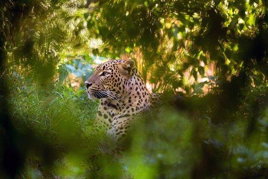 Wilpattu nasjonalpark heldags safari...