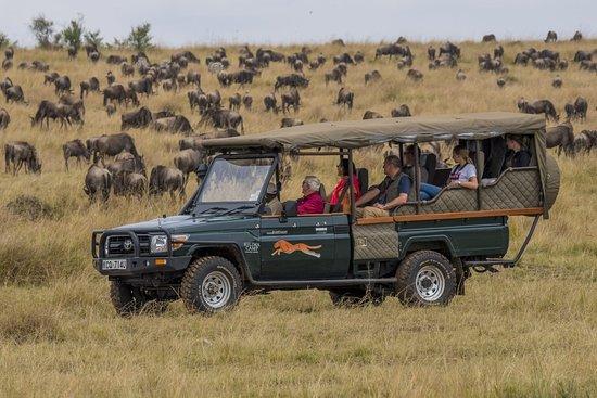 Safari Mapeka