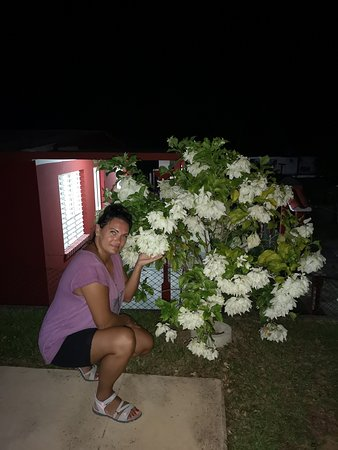 terassa and flowers at night