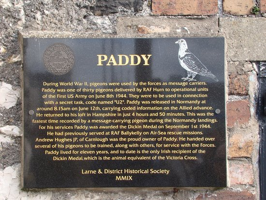 Paddy the Pigeon