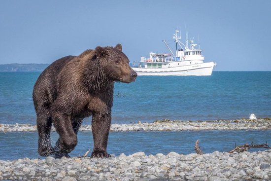 Geographic Marine Expeditions (GMX) Katmai Bear Viewing