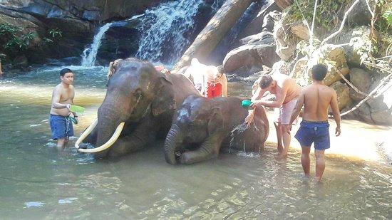 Blue Tao Elephant Village, Chiang Mai, Thailand.