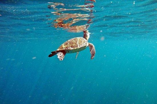 Turtle Snorkeling por Adrenailha