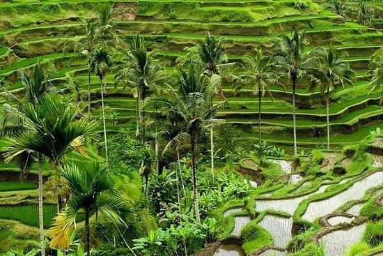 Full Day Exploring UBUD and Rice Terrace – fotografija