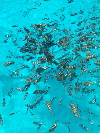 о.Бора-Бора, Французская Полинезия: Bora-Bora Archipel de la Société, Polynésie française
