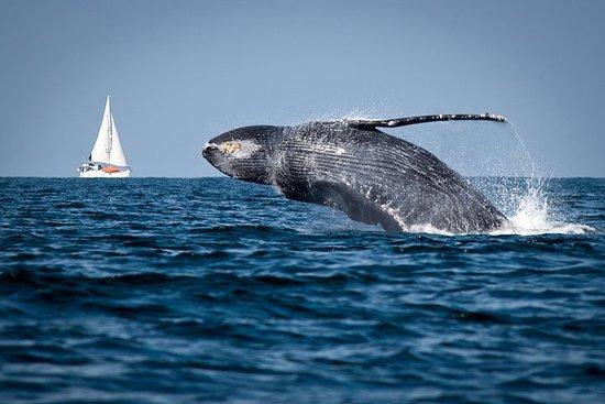 Humpback whales Watching + Samana...
