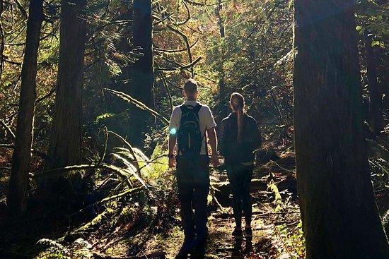 Mystical Rainforest Tour: Bathing Forest & Nature Mysticism